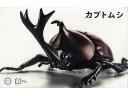 FUJIMI 自由研究21 生物編 獨角仙 富士美 組裝模型 170725