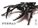 FUJIMI 自由研究22 生物編 鍬形蟲 富士美 組裝模型 170732
